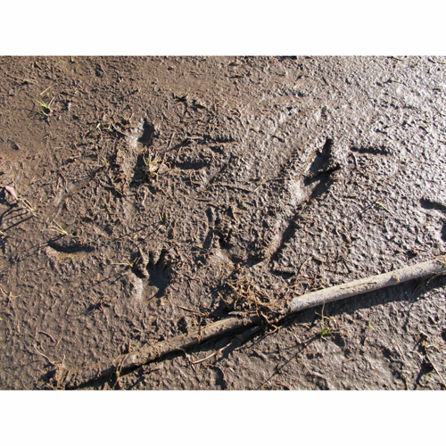 Dama wallaby tracks 6sq