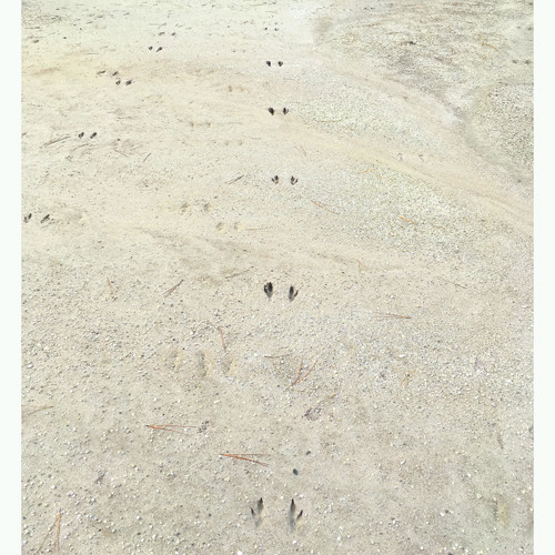 Dama wallaby tracks 9sq