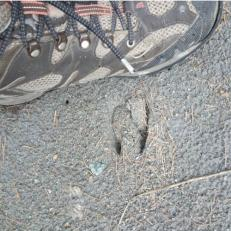 Chamois tracks 4sq