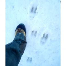 chamois tracks 5sq