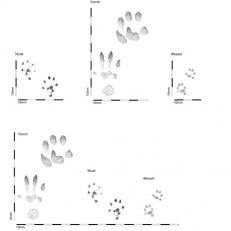 mustelid tracks comparison 500sq