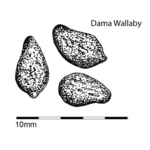 dama wallaby droppings 1